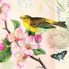 Paquete de servilletas Pajaro - Paquete de servilletas decorativo