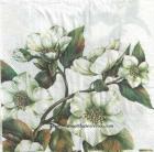 Paquete de servilletas, Almendro - Paquete de servilletas decorado, Reloj