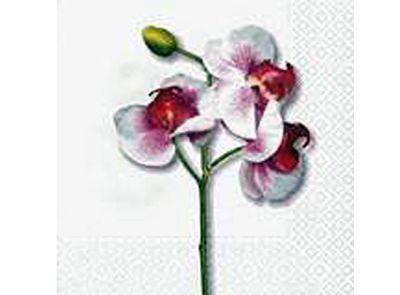 Paquete servilletas, Orquidea Blanca - Paquete de servilletas decorativas, Orquideas