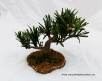 Árbol de olivo - Árbol de olivo en miniatura