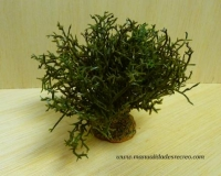 Arbusto verde - Arbusto verde
