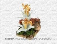 Cactus en miniatura -