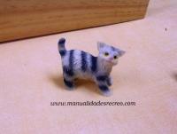 Gato en miniatura - Gatito de miniatura