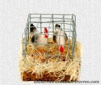 Jaula de aves - Jaula de metal con aves