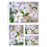 Papel de arroz, Flores Blancas - papel de arroz, Flores blancas