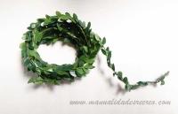 Enredadera de hojas - Enredadera de hojas en miniatura