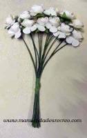 Z011 Rosas Blancas