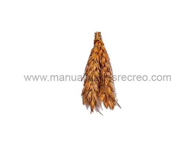 Mazorcas - Ristra de panochas en miniatura